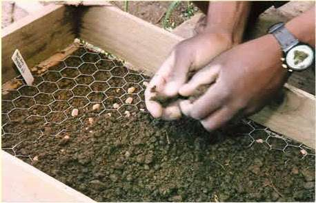 Honeycomb pattern for planting