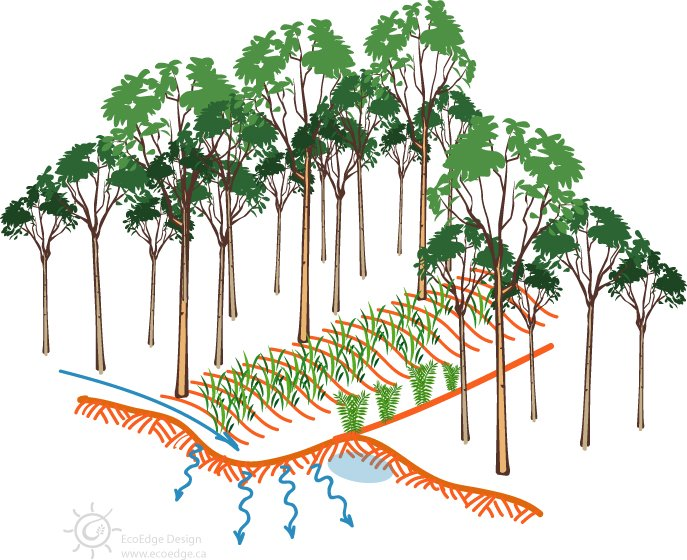 Diagram of a swale