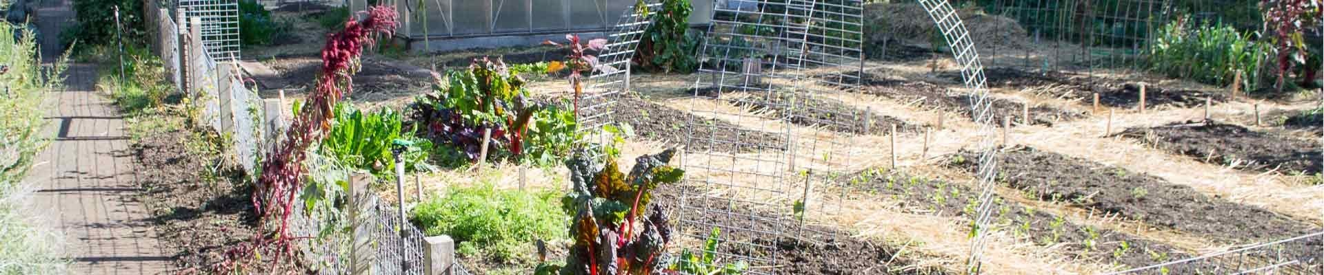 Image of urban vegetable plots